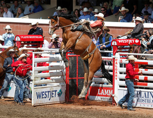 Jake Watson of Hudson's Hope, British Columbia rides the horse Xena Warrior in the saddle bronc event during the Calgary Stampede rodeo in Calgary