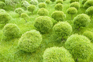 green trees growing in garden. top view of summer landscape