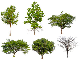 isolated collection tree on white background, full resolution tree on white background