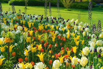 Papiers peints Jaune Les tulipes hollande du jardin de Keukenhof
