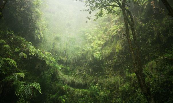 Regenwald tropisch nass abenteuer