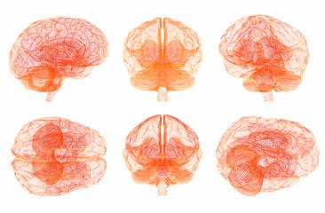Human brain anatomy. Set of multiple views.