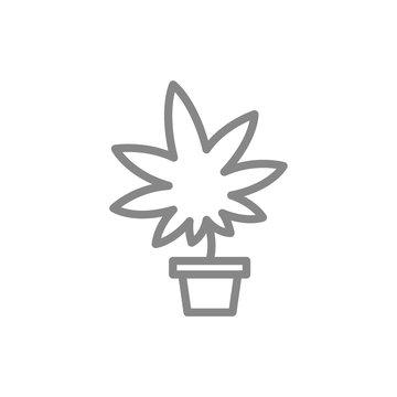Medical marijuana cultivation, cannabis leaf with pot line icon.