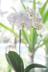 White orchid flower pot on the balcony