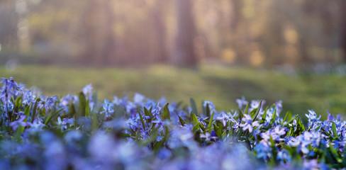 Garden Poster Spring blue flowers in the light