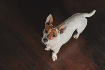 Kleiner Terriermischling schaut von unten in die Kamera