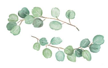 Watercolor illustration of eucalyptus twigs. Isolated