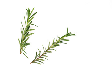 a branch of rosemary on white