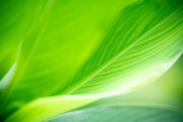 Closeup nature view of green leaf on blurred greenery background in garden with copy space for text using as summer background natural green plants landscape, ecology, fresh wallpaper concept. Wall mural