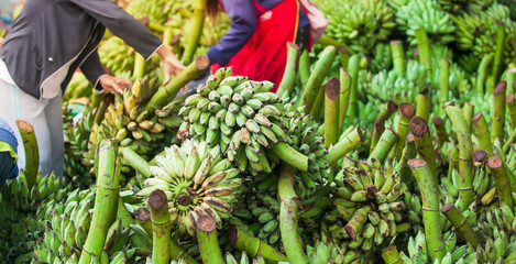 Laotian women vendor selects fresh bananas fruit for sale at a daily market. Fototapete