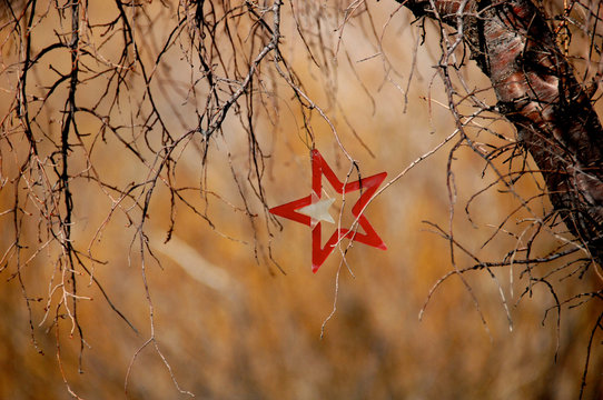 Red star ornament caught in tree