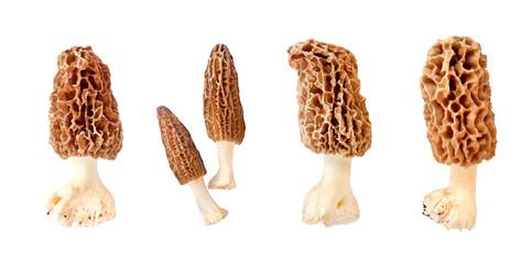 Fototapeta Collage of morel mushroom isolated on white background obraz