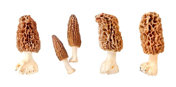 Collage of morel mushroom isolated on white background