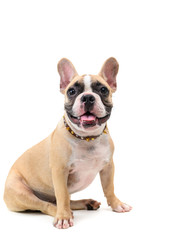 Autocollant pour porte Bouledogue français cute french bulldog sitting isolated on white