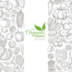 Organic sketch fresh vegetables vector retro background with hand drawn doodle greens on white