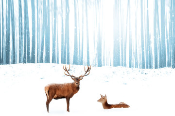 Wall Mural - Noble deer in the background of a winter fairy forest. Snowfall. Winter Christmas holiday image. Free space for text.