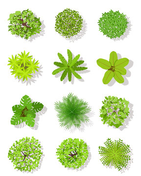 Top view tree. Landscape plan trees with leaves and bushes. Garden planting vector isolated on white design elements