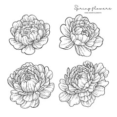 Peony flowers in japanese tattoo style. Hand drawn inked flowers. Neo traditional floral elements. Vector illustration.