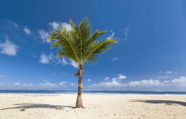 Palm on the beach. Nice weather on the beach.