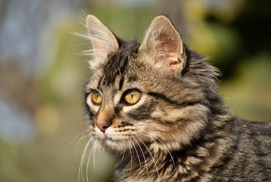 Cute cat outdoor in summer