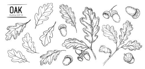Obraz Set of oak leaves and acorns. Hand drawn illustration converted to vector - fototapety do salonu