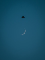 New moon on a clear sky evening