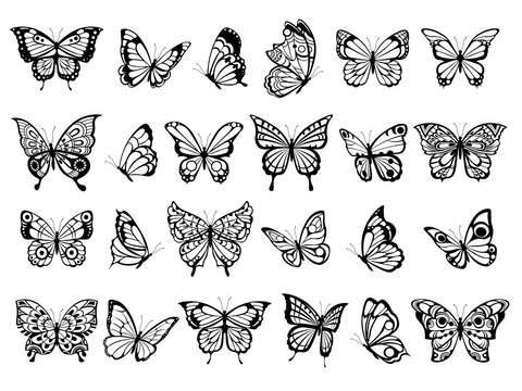 Butterfly collection. Beautiful nature flying insect exotic butterflies with funny wings vector illustration