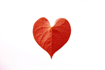 red heart leaf shaped on white background
