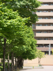Fototapete - マンションの植栽