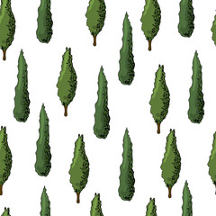 Seamless pattern with italian  cypresses. Ink and colored elements isolated on white background.