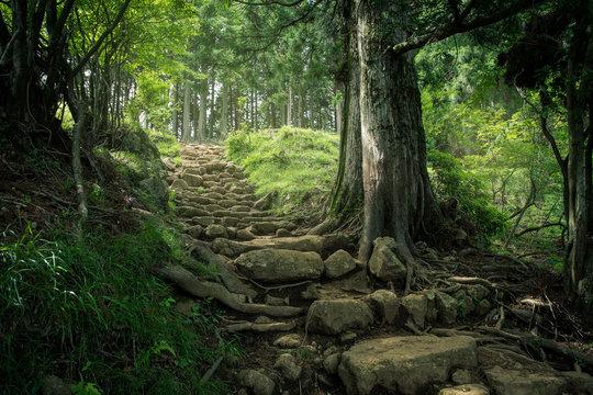 神奈川県 大山