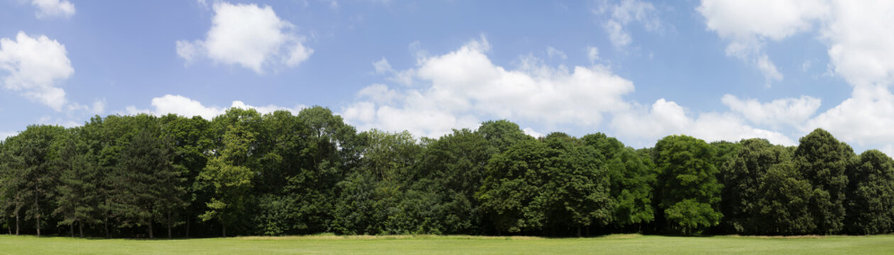 Very high definition Treeline with a colorful blue sky