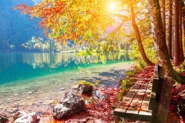 Spoed Fotobehang Olijf Bench and yellow autumn trees on the shore of lake in Alps, Austria. Beautiful autumn landscape
