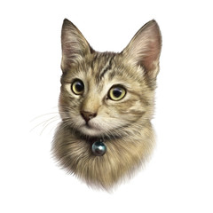 Cute kitty isolated on white background. Realistic portrait of a cat with big eyes. Drawing of a pet. Design template. Good for print T shirt, pillow, banner. Hand painted pets illustration.