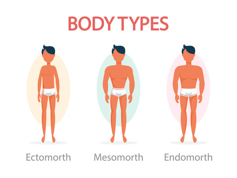 Body type concept. Endomorph, mesomorph and ectomorph
