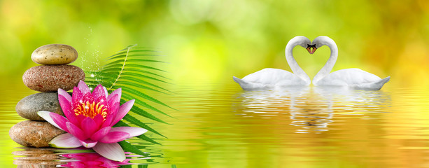 image of lotus flower, stones and swans in the park close up