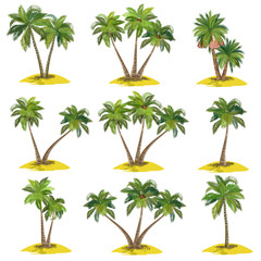 Set of palm trees (coconut, date, acai), realistic vector illustrations on white background.
