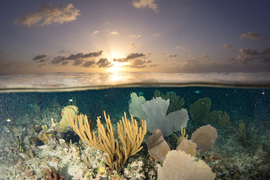 Split shot of coral reef and landscape in Cozumel, Mexico
