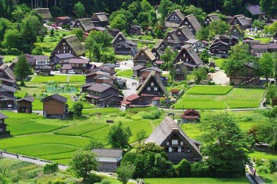 Shirakawago in Hida Gifu, Japan 真夏 緑の白川郷