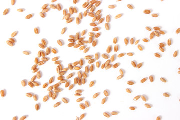 wheat grains on a light background