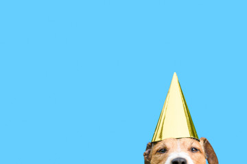 Birthday and celebrations concept with dog wearing golden party hat