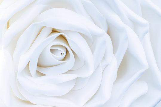 One huge, large white decorative rose