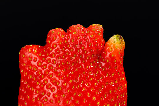 Extreme close up of an unusual strawberry fruit looking like human hand or foot fingers on black background