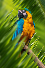 Wall Mural - Parrot portrait in jungle