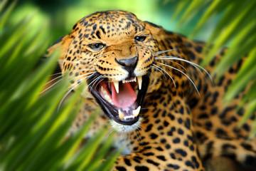 In de dag Luipaard Leopard portrait in jungle