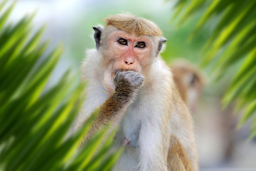 Wall Mural - Monkey portrait in jungle