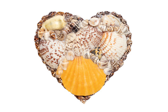 Heart sea shell background. Closeup of seashell heart isolated on a white background. Design element for valentine, wedding, mother day or other holidays. Macro.