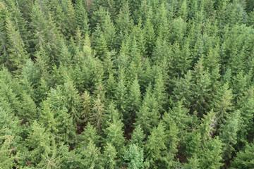 Fotobehang Bossen czech spruce forests mountain view
