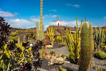 Tropical cactus garden in Guatiza village, Lanzarote, Canary Islands, Spain