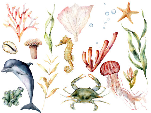 Watercolor sea life set. Hand painted coral reef, dolphin, crab, seahorse, jellyfish, starfish and laminaria isolated on white background. Aquatic wildlife illustration for design, print, background.